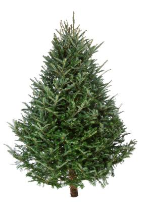 Plant a living Christmas tree and enjoy that holiday for many years to come